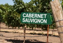 What is Cabernet Sauvignon