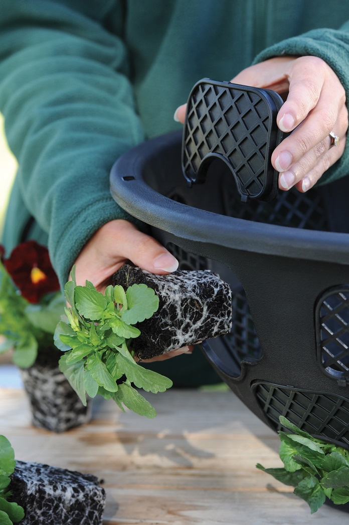 how to care for plug plants