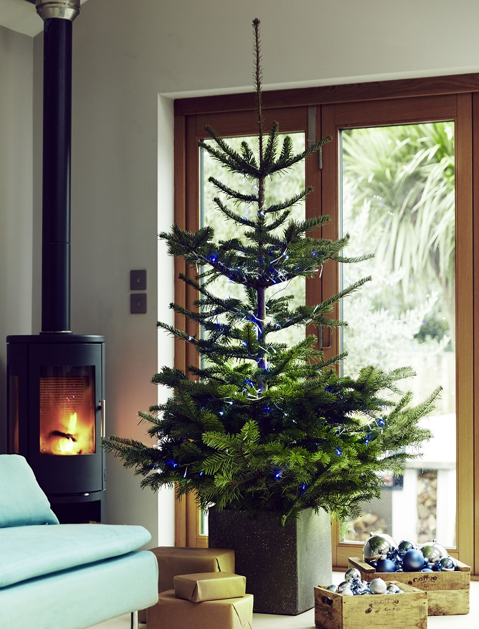 What is the best Christmas tree to buy