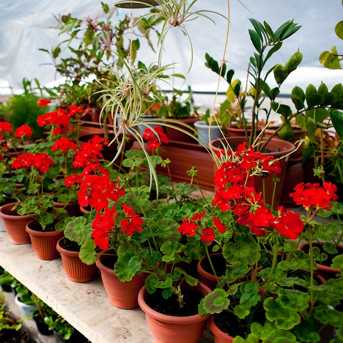 How to protect tropical plants from frost in winter