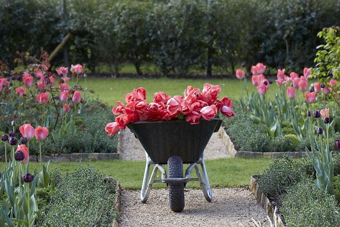 best tulip gardens