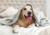 Best dog-friendly hotels