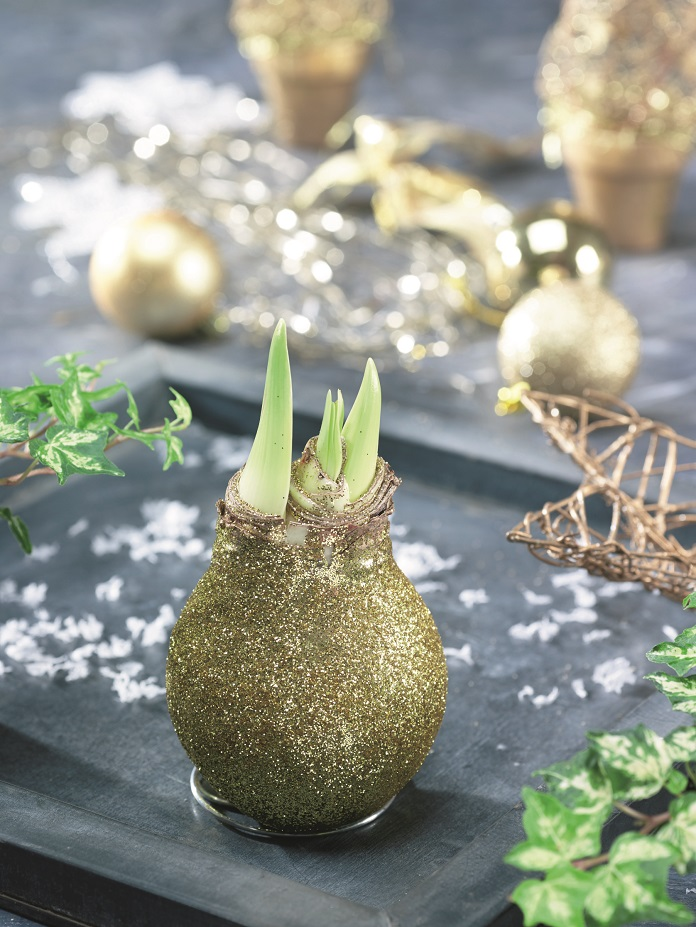 what bulbs to plant now for spring