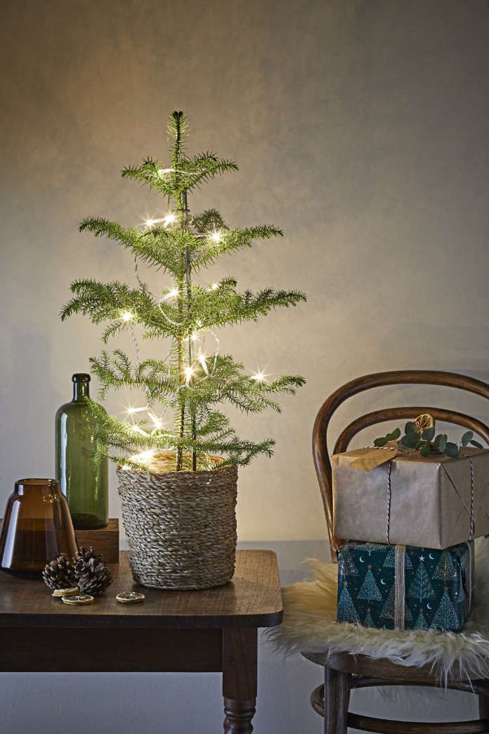 Add fairy lights to mini-trees (Dobbies Garden Centres/PA)