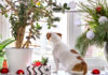 Christmas houseplants makeover