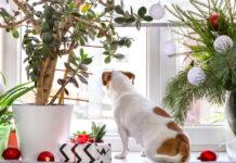 Christmas houseplants makeover
