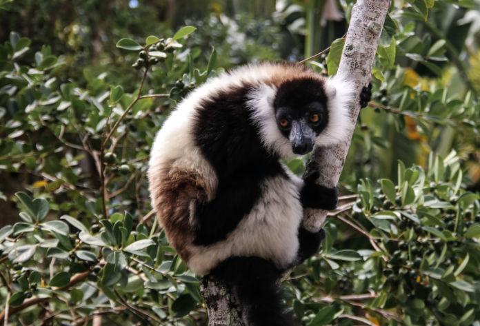Rainforests of the Atsinanana, Madagascar