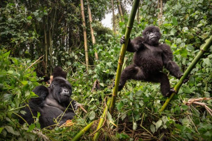 Virunga National Park, Democratic Republic of the Congo