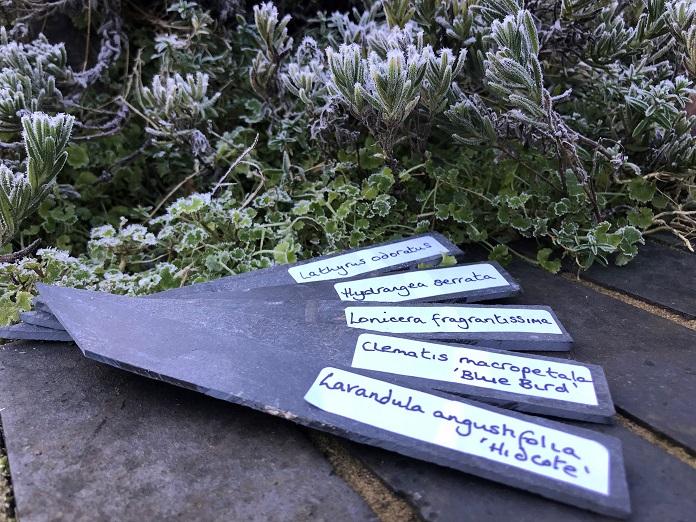 Latin plant names