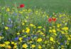 Create a mini meadow