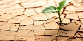 climate change gardening
