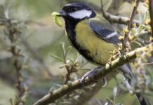 how to encourage wildlife to your garden