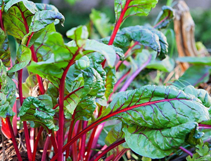 how to grow a vegetable garden for beginners