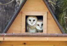 how to make a nesting box