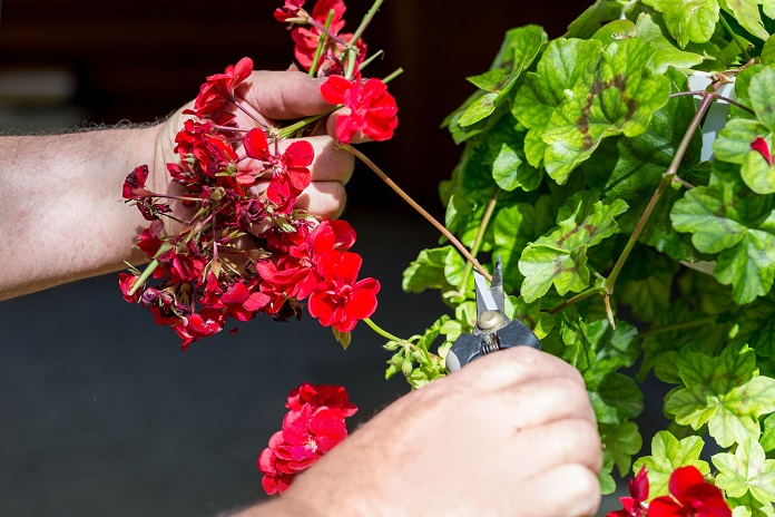 how to tidy your garden