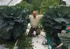 How to grow giant veg