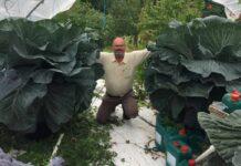How to grow giant veg