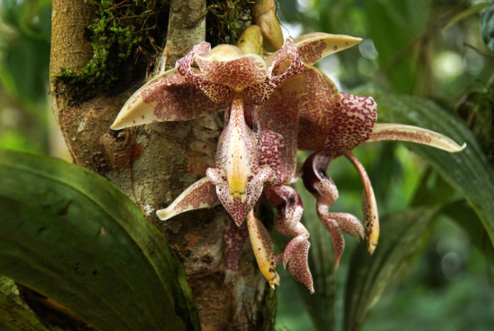 Many orchids grow on tree trunks (Thinkstock/PA)