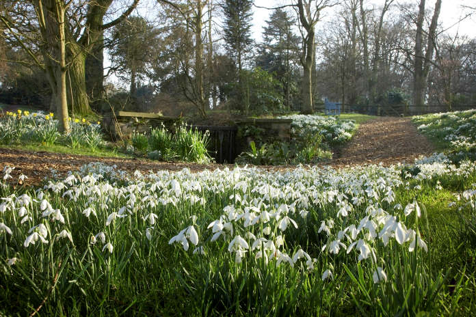 Snowdrops at Rode Hall & Gardens. (Neil Jinkerson/PA)