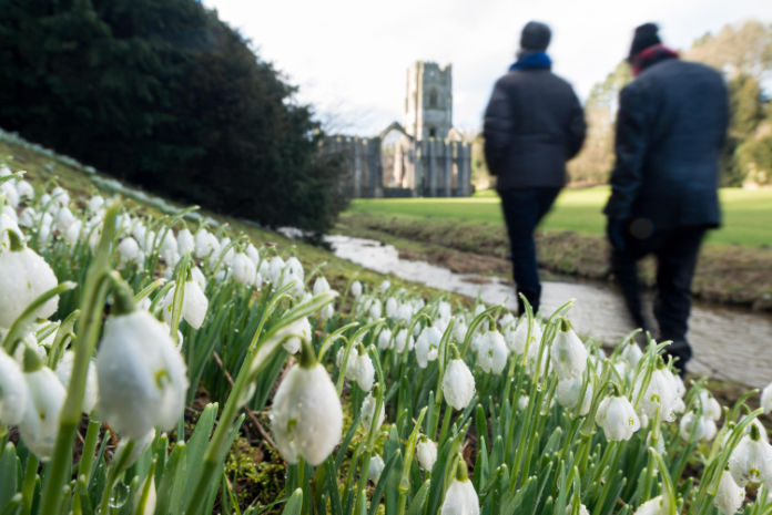 Snowdrops at Fountains Abbey.