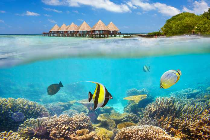 Maldives Island - underwater view with fish