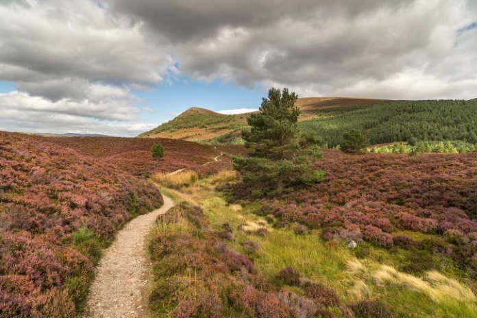 Walk for wellness across Glen Feshie