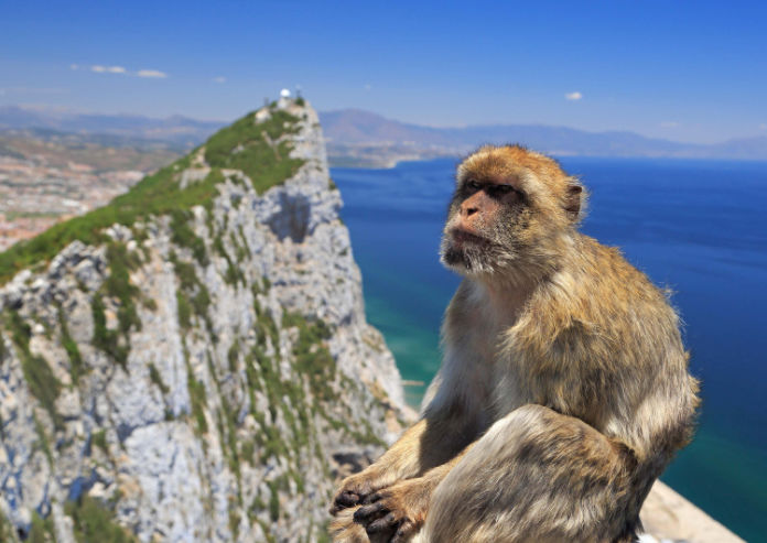 A Barbary macaque on top of the Rock of Gibraltar