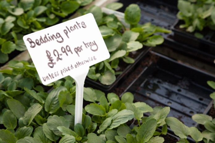 bedding plants sign and seed trays in garden centre