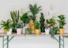 Repotting houseplants guide