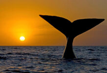 Whale watching in the UK