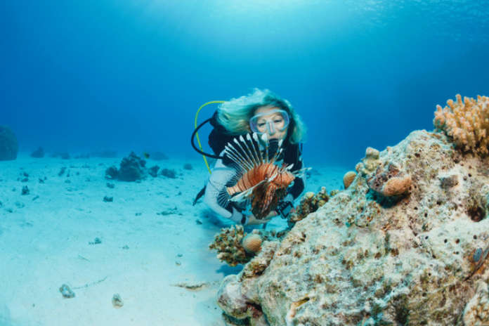 Lionfish fish Underwater Sea life  Coral reef  Underwater photo Scuba Diver Point of View. Marine conservation holidays scuba diver and lion fish.