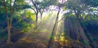 Urband forests Sanjay Gandhi National Park