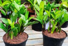 A collection of easy care houseplants