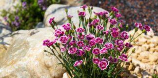 A plant on top of concrete rocks; example of a garden design idea