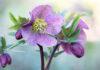 Garden photography: a photo of a flower