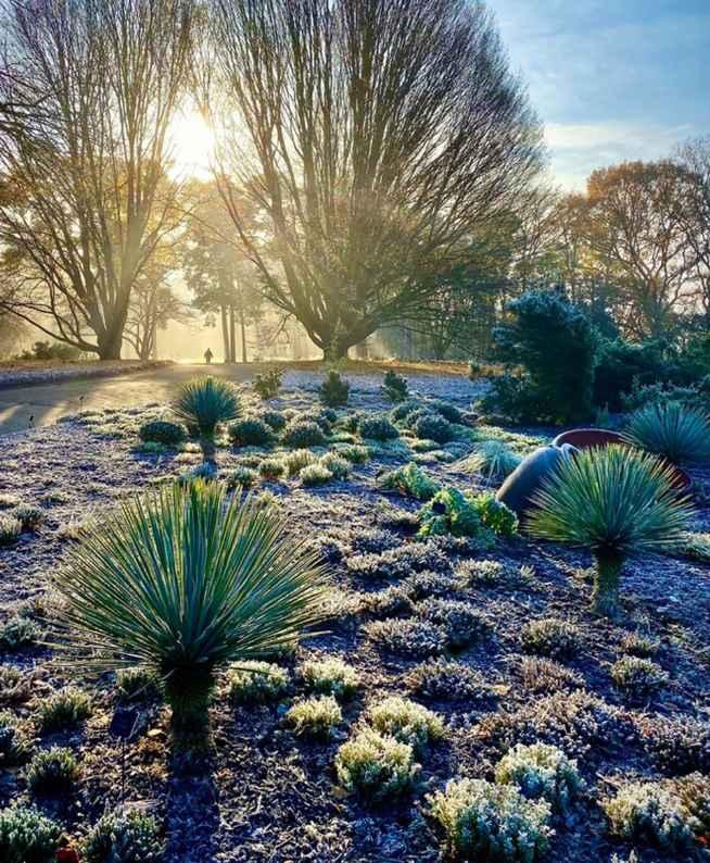 Finding the light, garden photography