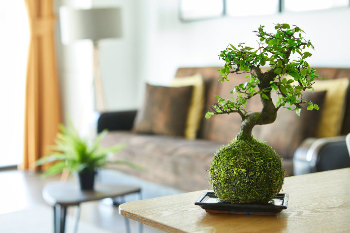 Tranquil plants for home gifts