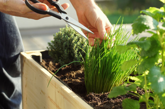 A gardener growing herbs; example of wellbeing