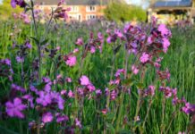 A photo of a wild lawn with colourful flowers