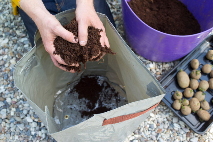 How to grow your own vegetables: A person holding soil
