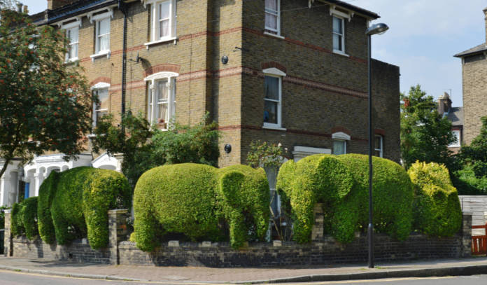 Topiary hedges in a residential Street in London N5 (Finsbury Park) clipped into the shape of elephants