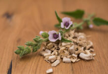 Marsh mallow dried root (benefits of marshmallow root extract for skins)