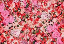 An image of a wall covered of pink and vibrant flowers