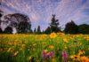 rewild your garden with prairie plants