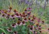 A collection of plants outside, an example of good bedding plants for autumn