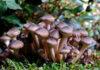 A bunch of mushrooms, how to grow mushrooms