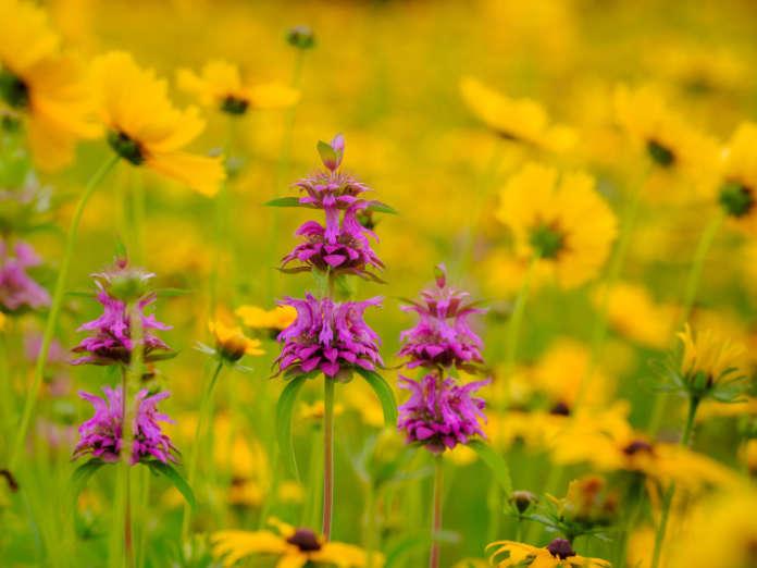 rewild your garden flowers
