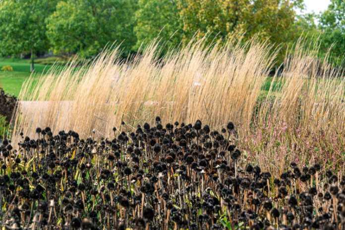 Autumn plants black and brown plants