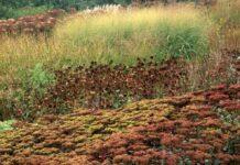 Autumn plants in garden