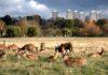 Best parks in the world-Richmond Park (Alamy/PA)
